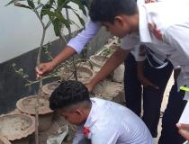 Students are busy to plant trees.