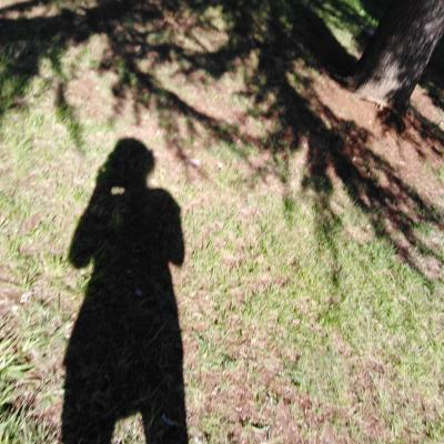 In a tree shadow