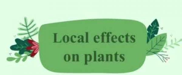 Embedded thumbnail for Local effects of climate change